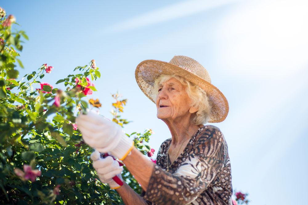 Senior woman gardening enjoying the Charter Senior Living Lifestyle
